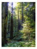 Avenue of the Giants 1 Prints by Michael Polk