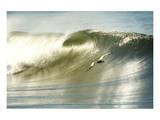 Surfing Pelican Print by Steve Munch