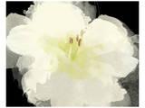 Apple Blossom Flower Posters par Irena Orlov