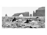 Dolphins at Anacapa Arch Print by Steve Munch