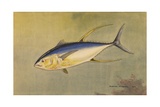 A Painting of the Rare Allison Tuna Giclee Print by Hashime Murayama
