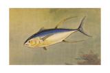 A Painting of the Rare Allison Tuna Giclee Print by Hashime Murayama