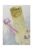 Painting of Three Species of Jellyfish Floating Together Giclee Print by William H. Crowder