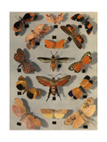 Collection of Various Little Moths Photographic Print by Edwin L. Wisherd