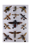 Collection of Carpenter Bees, Wasps, Flies and Saw Flies Photographic Print by Edwin L. Wisherd