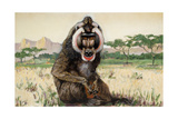 Painting of a Male Mandrill, Papio Sphinx Giclee Print by Elie Cheverlange