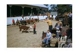 Spectators Watch as Auctioneer Points and Calls at Cattle Auction Giclee Print by Robert Sisson