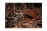 Lumbermen Conversing Among Fallen Giant Redwood Trees Fotografisk tryk af B. Anthony Stewart
