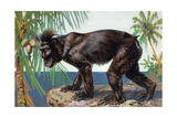 Painting of a Rare Crested Black Macaque, Celebes Black Ape Giclee Print by Elie Cheverlange