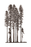 Illustration of Redwood Tree Growth Along the Pacific Coast Giclee Print by Robert Van Pelt