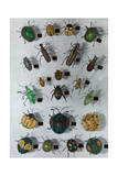 Collection of Various Small Beetles Fotografisk tryk af Edwin L. Wisherd