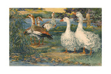 A Painting of Egyptian Geese and Sebastopol Geese Giclee Print by Hashime Murayama