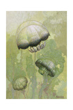 Painting of Several Stomolophus Meleagris Jellyfish Giclee Print by William H. Crowder