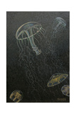 A Painting of Two Species of Deep Water Jellyfish Giclee Print by William H. Crowder