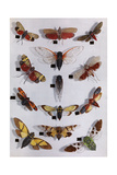 Collection of Cicadas, Lantern Flies, and 17-Year Locusts Photographic Print by NGS Studio Shot