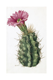 A Painting of Hedgehog Cactus and its Blossom Giclee Print by Mary E. Eaton