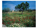 Windmill flower meadow Majorca Posters