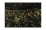 A Women Walks Through Shoulder-High Ferns Along Otter Creek Photographic Print by Clifton R. Adams