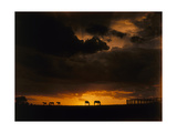 Horses Grazing on the Crest of a Hill at Sunset Photographic Print by Volkmar Wentzel