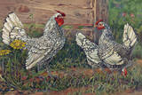 Silver Sebright Bantams are known for the Lacing on their Feathers Giclee Print by Hashime Murayama