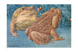 A View of the Large Marine Toad from Tropical America Giclee Print by Hashime Murayama