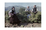 Girls Pick Rose Blossoms for Distilling into World-Famous Oil Fotoprint av Wilhelm Tobien