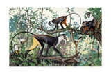 Painting of Diana and Roloway Monkeys in a Treetop Setting Giclee Print by Elie Cheverlange