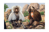 Painting of a Hamadryas and a Gelada Baboon Giclee Print by Elie Cheverlange