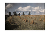 A View of a Wheat Field with Stacked Sheaves Near Oxford Photographic Print by Clifton R. Adams