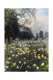 Yellow Flowers Bloom in a Meadow in Yosemite Valley Photographic Print by  Pillsbury Picture Co.