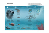 The Ocean Food Chain; Predators, Consumers and Producers Giclee Print by Hernan Canellas