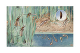 An Illustration of the Life Cycle of Salt-Marsh Mosquitoes Giclee Print by Hashime Murayama