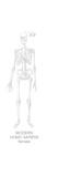 Height of a Modern Homo Sapiens Female Giclee Print by Bruce Morser