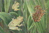 Tree Toads Change Color Depending on the Humidity of the Atmosphere Giclee Print by Hashime Murayama