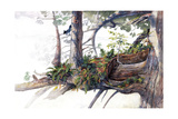An Ecosystem Survives in the Crowns of Redwood Trees Giclee Print by Amadeo Bachar
