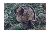 A Painting of a Ruffed Grouse, Bonasa Umbellus Umbellus Giclee Print by Louis Agassi Fuertes