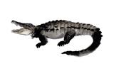 A Siamese Crocodile Giclee Print by Jillian Tamaki