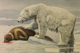 A Polar Bear Feeds on a Ribbon Seal Giclee Print by Louis Agassi Fuertes