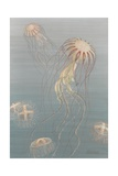Painting of Two Species of Jellyfish, One of Which Has a Colony Stage Giclee Print by William H. Crowder