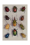 A Group of Scarabs from the Scarabaeid Family Fotografisk tryk af Edwin L. Wisherd