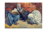Fancy Pigeons known for their Fan-Shaped Tail Giclee Print by Hashime Murayama