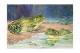 Two Southern Bullfrogs Sit in Water Giclee Print by Hashime Murayama