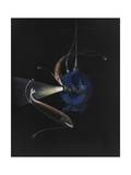 Two Deep Seat Creatures Swim around the Bathysphere Giclee Print by Else Bostelmann