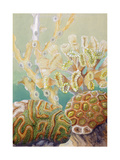As New Polyps Develop, the Old Ones Beneath Die, But Skeletons Remain Giclee Print by Else Bostelmann