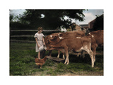 A Girl Feeds Calves on a Pennsylvania Dutch Farm Photographic Print by J. Baylor Roberts