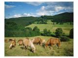 Horses Murnau Bavaria, Germany Art
