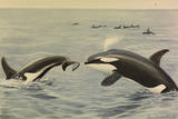 Orcha Whales Giclee Print by Louis Agassi Fuertes