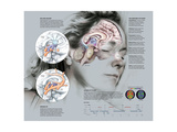 Illustration of Brain Activity During Slumber Giclee Print by Bruce Morser