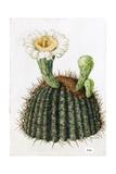 A Painting of a Saguaro Cactus and its Blossom Giclée-tryk af Mary E. Eaton
