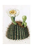 A Painting of a Saguaro Cactus and its Blossom Giclee Print by Mary E. Eaton